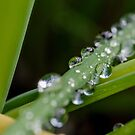 After the rain by Mark Williams