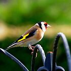 Profile of a Goldfinch by Mark Baldwyn