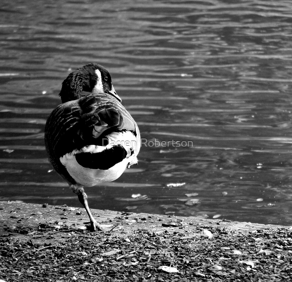 Birds @ Crystal Palace (Black and White London 2007) by Darren Robertson