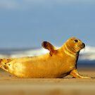 Seal by Kasia Nowak