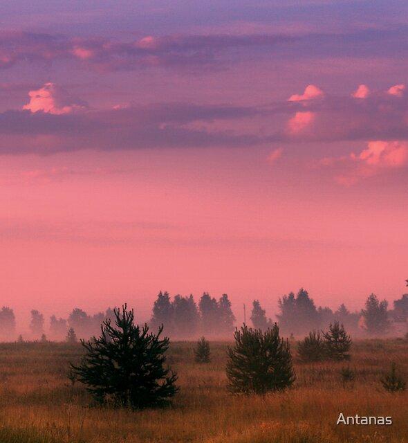 Break in the Grassland by Antanas