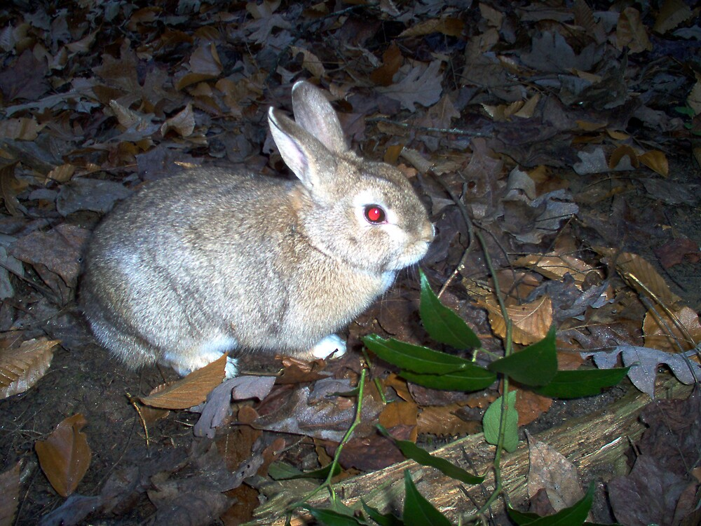Red Eyed Bunny by Allen Carr