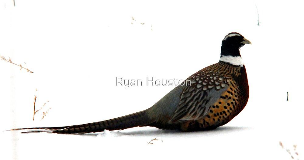 Snowbank Pheasant by Ryan Houston