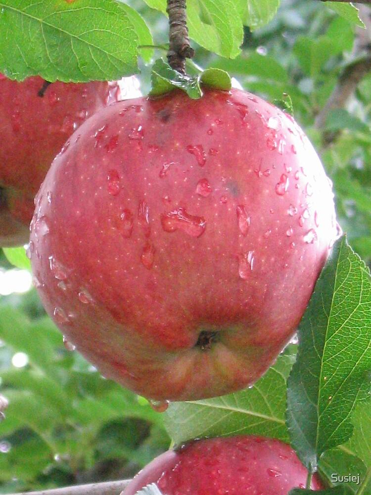 Apple beauty by Susiej