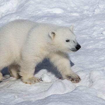 Polar Bear Cub by SunDwn