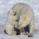 Polar Bear Cub And Mom by SunDwn