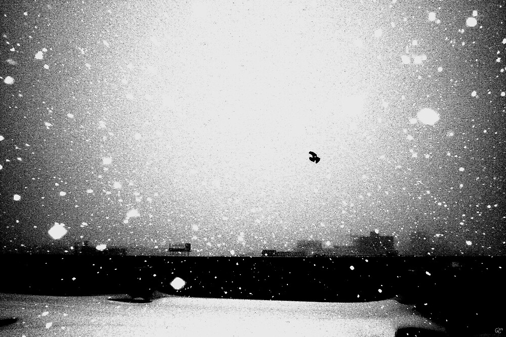 Winter Crow by G.T. Roe