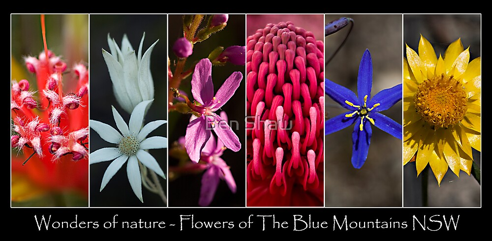 Wonders of Nature - Flowers of The Blue Mountains NSW by Ben Shaw
