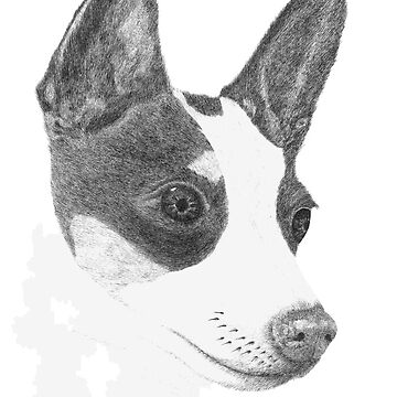 Toy Fox Terrier by JaMiHo1981