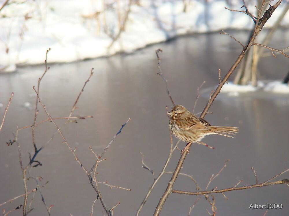 My winter bird by Albert1000