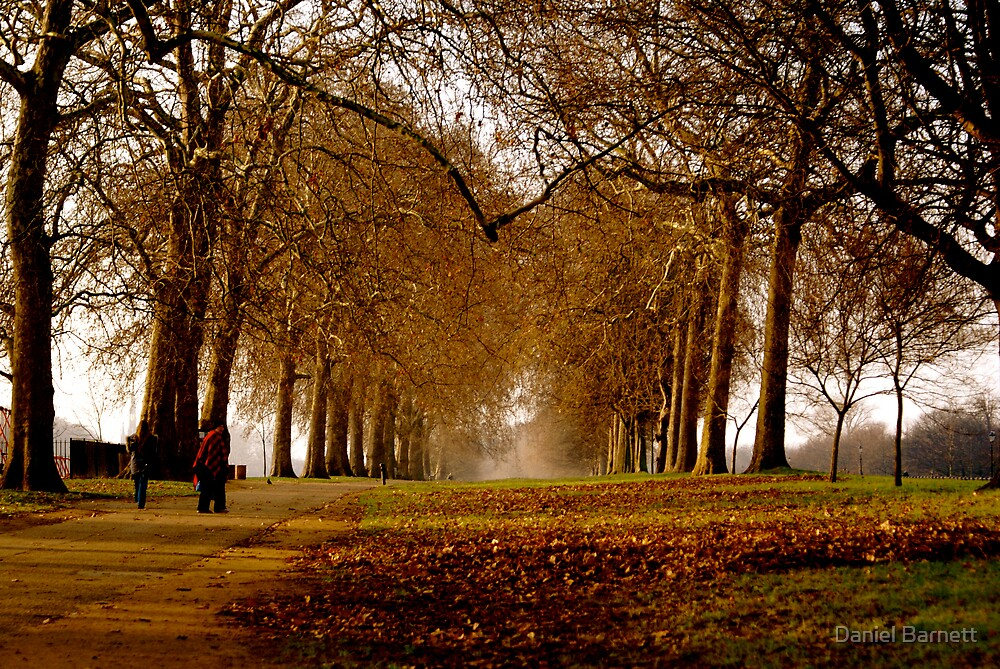 Autumn colours on tree lined paths really are magical by Daniel Barnett
