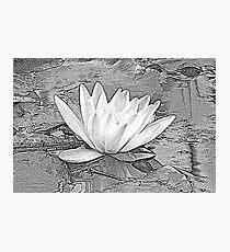 Water Lily... Dorset UK Photographic Print