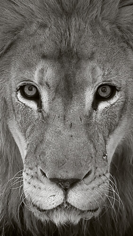 Lion Eyes by Margaret Barry