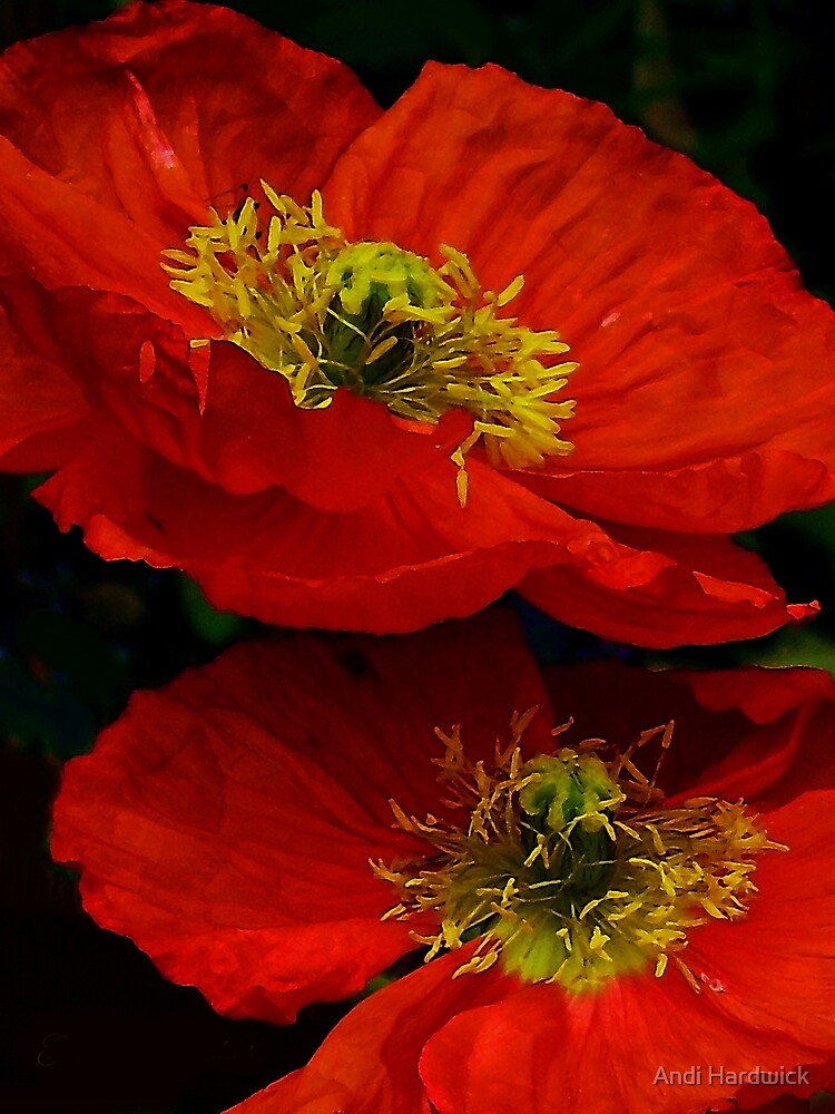 Hopping Poppies by Andi Hardwick