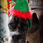 A Boxer Christmas - Christmas Card Series by Evita