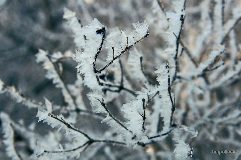 Below Zero - Ice Crystals on branch by timpollock