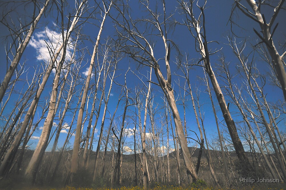 Battle Scarred But Still Standing - Snowy Mountains National Park by Philip Johnson