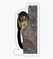 Possum des villes Sticker