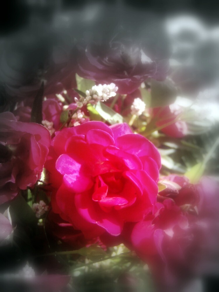 roses and wildflowers 2 by Dawna Morton