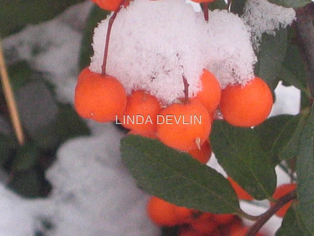 bittersweet in winter by LINDA DEVLIN