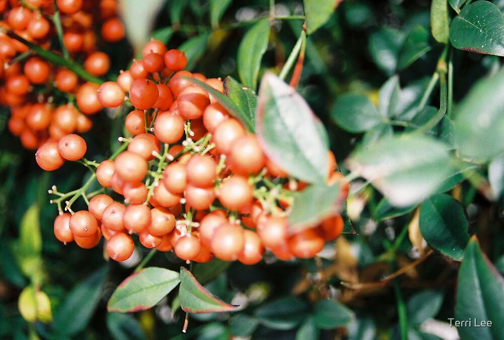 Berries by Terri Lee