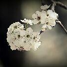 Frühlingsblühen von Evita
