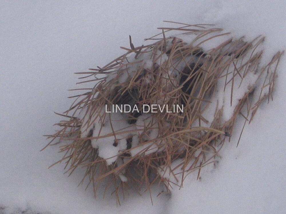 fallen nest by LINDA DEVLIN