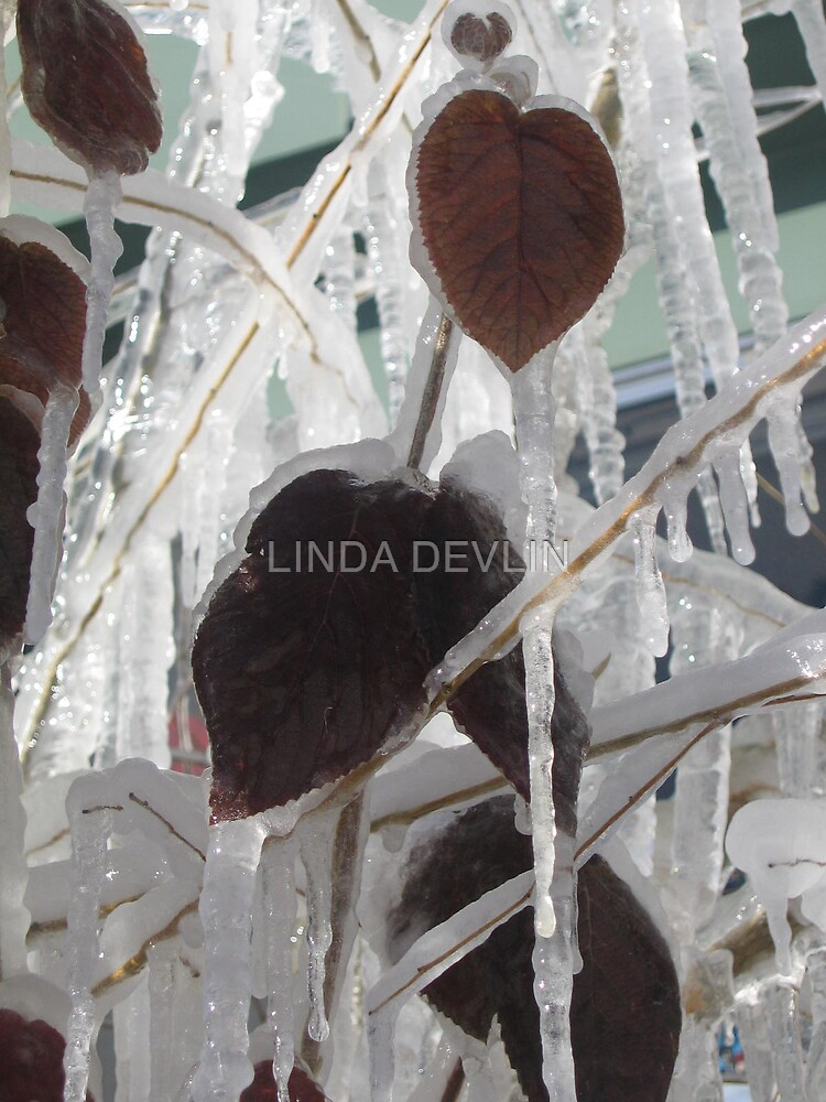 iced leaves 2 by LINDA DEVLIN