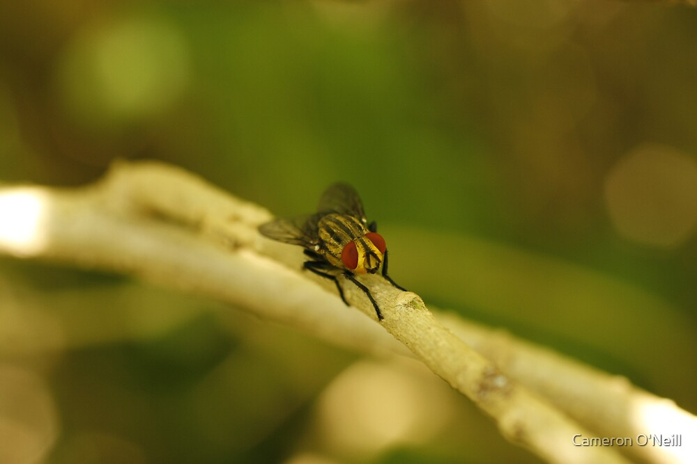 Blowfly by Cameron O'Neill