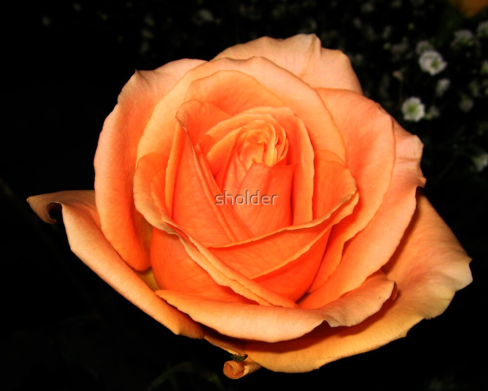 The Golden Rose, Another Look by sholder