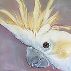 Sulphur-crested cockatoo by Glenda Jones