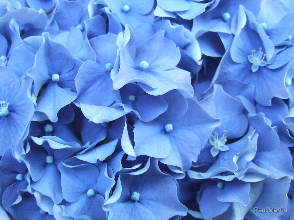 Blue by Paul Martin