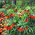 Orange Crown Imperials - Quintessentially Keukenhof by BlueMoonRose