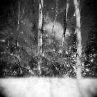Winter by eleniphotos67