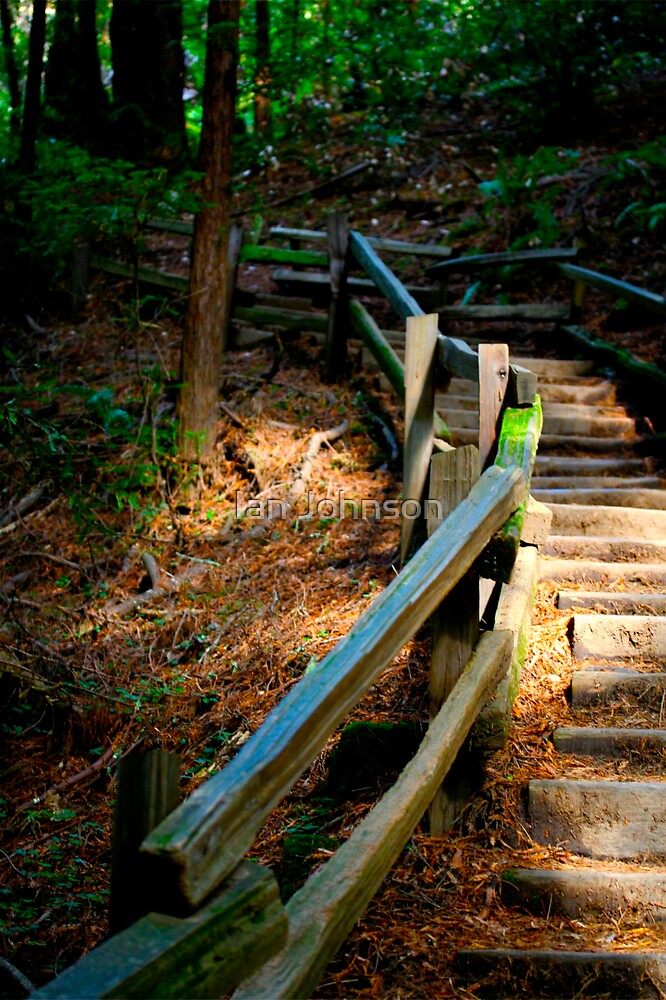 Stairway in the Forest by Ian Johnson