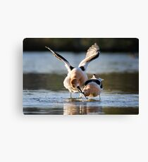 Ready to mate Canvas Print