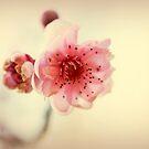 Ein Versprechen des Frühlings von Evita