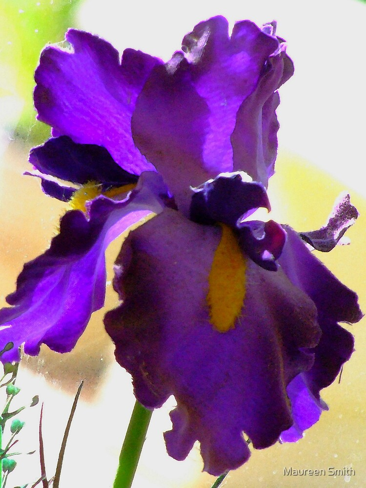 Iris by Maureen Smith