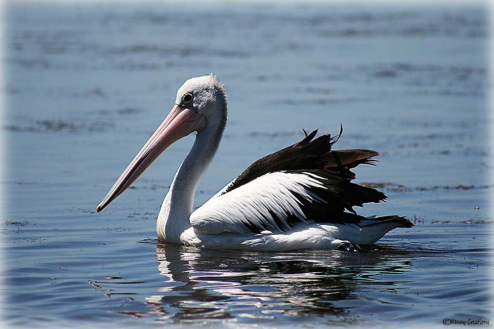 Pelican by kwishtie