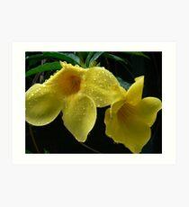 Yellow Allamanda Art Print