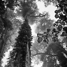 Look up - and up and up! by Clare Colins