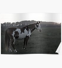 Ghostly Equine Poster