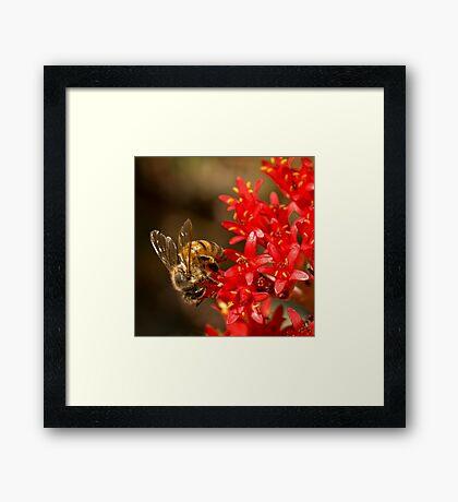 Biene auf scharlachroten Malerpinsel Gerahmtes Wandbild