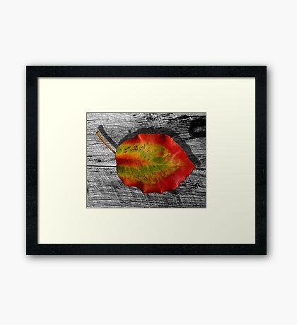 Leaf on Barnwood Framed Print