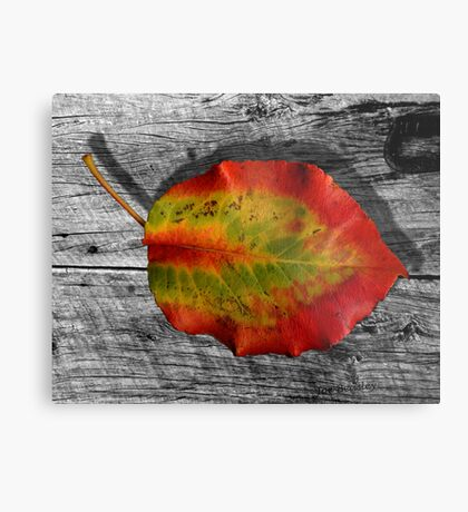 Leaf on Barnwood Metal Print