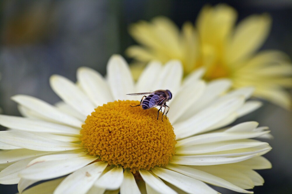 A real Buzz by willJohnson