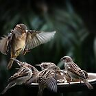 Seven sparrows 001 by kevin chippindall