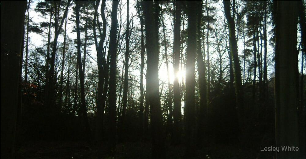Winter Sun by Lesley White