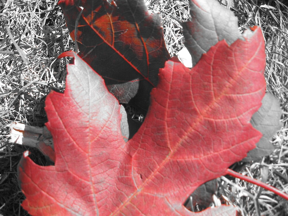 Leaves by choochy6