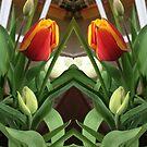 Tulipy Triangle by KazM